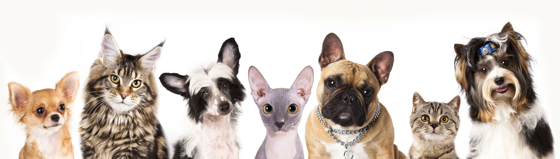 Pets waiting for their rabies vaccine